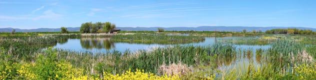 Pantanos en Oregon del sur. Foto de archivo libre de regalías
