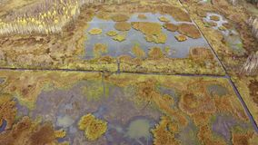 Pantanos en otoño desde arriba almacen de video