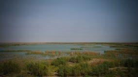 Pantanos mesopotámicos, hábitat de Marsh Arabs aka Madans Basra Iraq Imagen de archivo libre de regalías