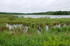 Pantanos y bosque del lago rice en el punto ventoso Fotos de archivo libres de regalías