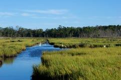 Pantanos y humedales de la orilla del jersey Imagenes de archivo