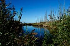 Pantanos y humedales de la orilla del jersey Fotografía de archivo libre de regalías