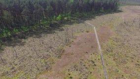 Pantanos y pantanos, reserva de Obara, cantidad aérea almacen de video