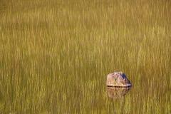 Pantanos y una roca Imagenes de archivo