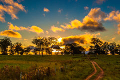 Pantantal Landscape in Brazil, Latin America Stock Photos