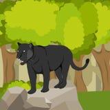 Pantera en una piedra contra un bosque, un depredador Icono de la pantera stock de ilustración