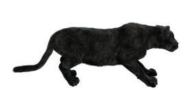 Pantera nera Fotografia Stock