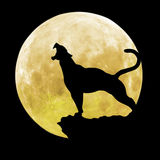 Pantera nera davanti alla luna Immagini Stock