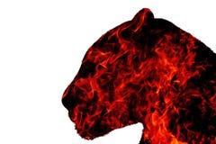 Pantera od ogienia na białym tle Obraz Royalty Free