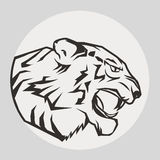 Pantera portret Gniewny dziki duży kot Zdjęcie Royalty Free