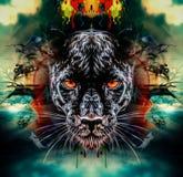 Pantera z niebieskimi oczami Fotografia Royalty Free