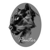 Pantery ` s profil Zdjęcie Stock