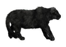 Panthère noire Photo stock
