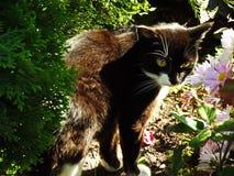 Panthère noire parmi des fleurs Images libres de droits
