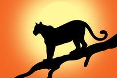 Panthère sur un arbre au coucher du soleil illustration stock