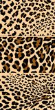 Panther stock photo