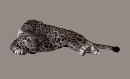 Panther Stock Photo