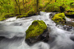 Panther Creek Falls. Waterfall over Moss Covered Rocks in Panther Creek Falls Stock Photography