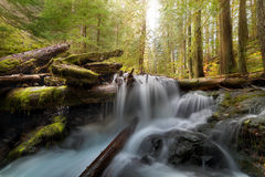 Panther Creek in Gifford Pinchot National Forest. Log Jam at Panther Creek in Gifford Pinchot National Forest Washington State Stock Image