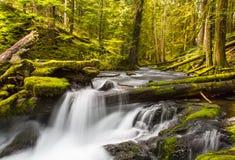 Panther Creek, WA Royalty Free Stock Photography