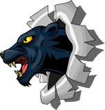 Panther, der durch zerreißt Lizenzfreies Stockbild