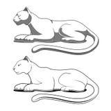 Panther emblem vector illustration Royalty Free Stock Image