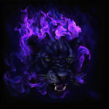 Panther head in flames Stock Photos