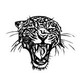 Panther Head Graphic. Panther Head vector illustration on white Stock Images