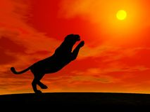 Panther jumping to the sun Royalty Free Stock Photography