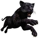 Panther Stock Photography