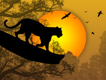 Free Panther On A Tree Royalty Free Stock Image - 18051156