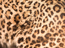 Panther pattern Stock Photography