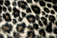 Free Panther Pattern Royalty Free Stock Images - 264169