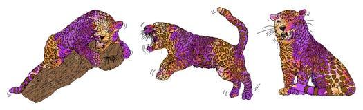 Panther pink beautiful animal Stock Photo