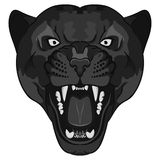 Panther Portrait. Angry wild big cat Stock Photography