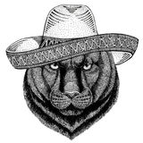 Panther Puma Cougar Wild animal wearing sombrero Mexico Fiesta Mexican party illustration Wild west. Wild animal wearing sombrero Mexico Fiesta Mexican party royalty free illustration