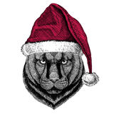 Panther Puma Cougar Wild cat Christmas illustration Wild animal wearing christmas santa claus hat Red winter hat Holiday Royalty Free Stock Photos