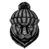 Panther Puma Cougar Wild cat Cool animal wearing knitted winter hat. Warm headdress beanie Christmas cap for tattoo, t. Panther Puma Cougar Wild cat Hand drawn Royalty Free Stock Images