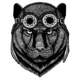 Cute animal wearing motorcycle, aviator helmet Panther Puma Cougar Wild cat Hand drawn image for tattoo, emblem, badge. Panther Puma Cougar Wild cat Hand drawn Royalty Free Stock Images