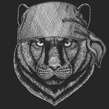 Panther Puma Cougar Wild cat Cool pirate, seaman, seawolf, sailor, biker animal for tattoo, t-shirt, emblem, badge, logo. Panther Puma Cougar Wild cat Hand drawn Stock Photos