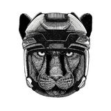 Panther Puma Cougar Wild cat Hockey image Wild animal wearing hockey helmet Sport animal Winter sport Hockey sport Royalty Free Stock Photography