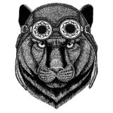 Panther Puma Cougar Wild cat wearing aviator hat Motorcycle hat with glasses for biker Illustration for motorcycle or Royalty Free Stock Photography
