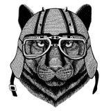 Panther Puma Cougar Wild cat wearing biker helmet Animal with motorcycle leather helmet Vintage helmet for bikers Royalty Free Stock Image