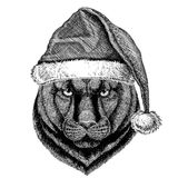 Panther Puma Cougar Wild cat wearing christmas hat New year eve Merry christmas and happy new year Zoo life Holidays Stock Images