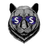 Panther Puma Cougar Wild cat wearing glasses with dollar sign Illustration with wild animal for t-shirt, tattoo sketch Stock Photography