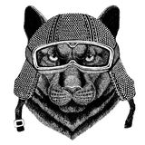 Panther Puma Cougar Wild cat wearing vintage motorcycle helmet Tattoo, badge, emblem, logo, patch, t-shirt Royalty Free Stock Photo