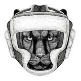 Panther Puma Cougar Wild cat Wild boxer Boxing animal Sport fitness illutration Wild animal wearing boxer helmet Boxing. Wild boxer Boxing animal Sport fitness Stock Photo
