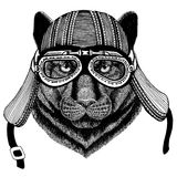 Panther Puma Cougar Wild catHand drawn image of animal wearing motorcycle helmet for t-shirt, tattoo, emblem, badge Stock Photography