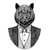 Panther Puma Cougar Wild catHipster animal Hand drawn illustration for tattoo, emblem, badge, logo, patch, t-shirt Royalty Free Stock Photo