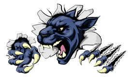 Panther ripping through background. Panther sports mascot breakthrough concept of a panther sports mascot or character breaking out of the background or wall Royalty Free Stock Photos